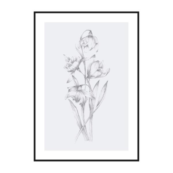 Постер на стену Ботаническая иллюстрация