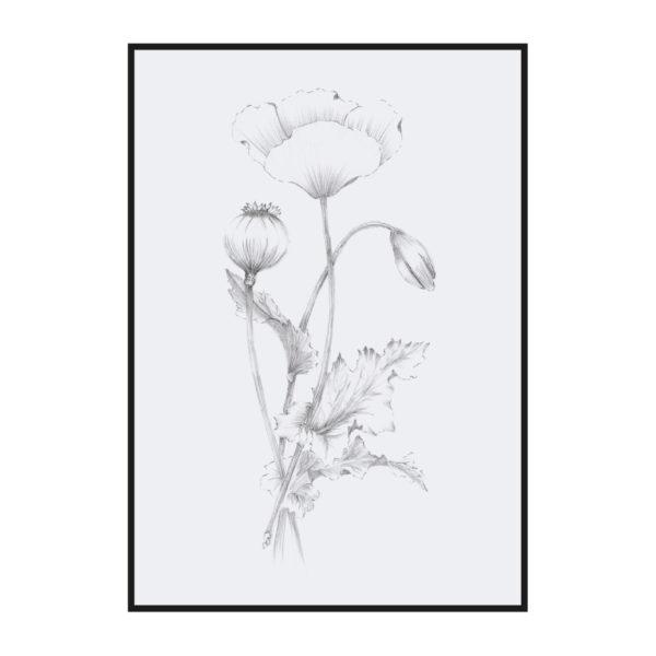 Постер на стену Ботаническая иллюстрация 2