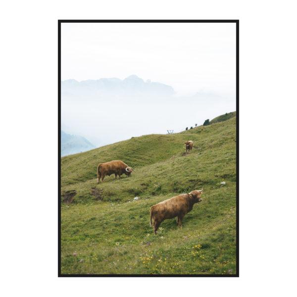постер овцы на лугу