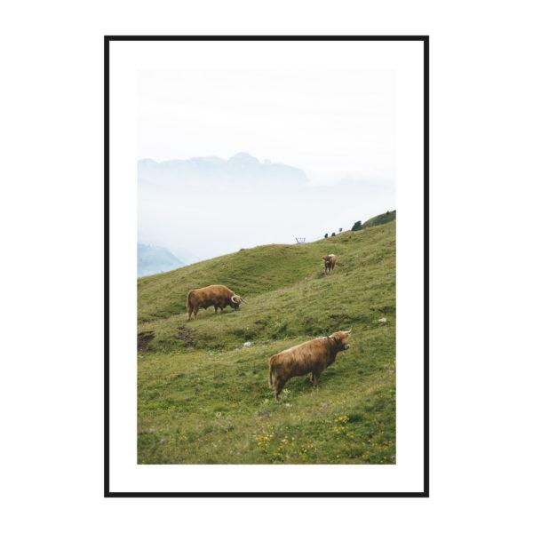 постер луг корова