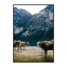Постер на стену Коровы на берегу горного озера
