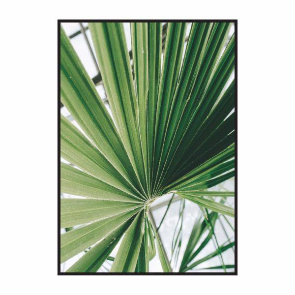 Постер на стену Лист пальмы