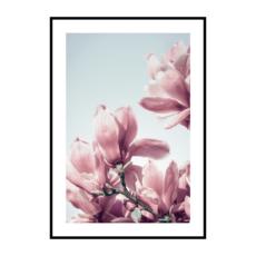 Постер на стену Магнолия розовая