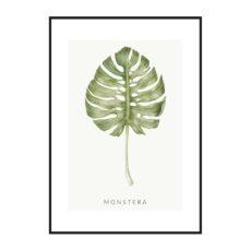 Постер на стену Monstera