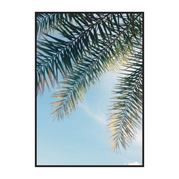 Постер на стену Листья пальмы голубое небо