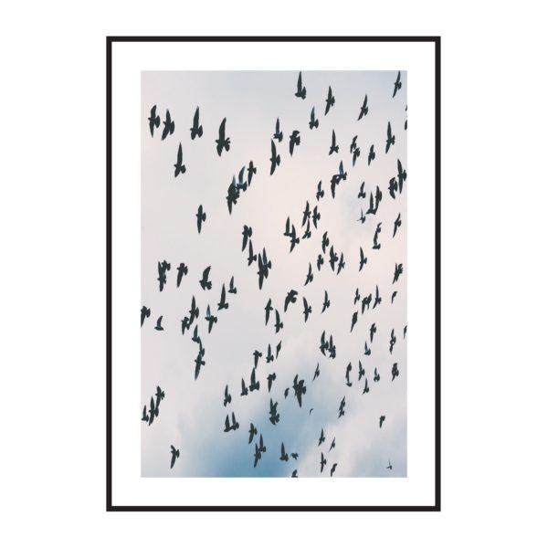Постер на стену Птицы