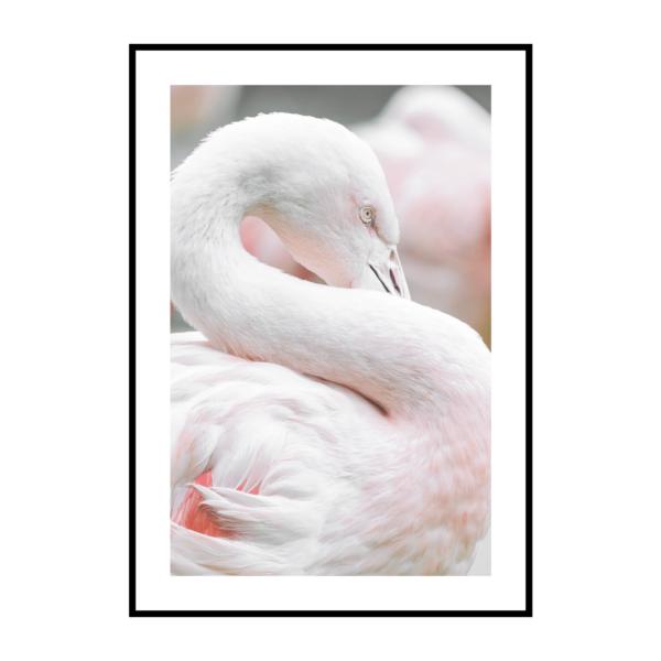 Постер на стену Фламинго
