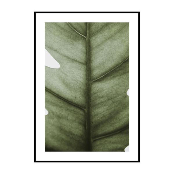 Постер на стеун Широкий лист