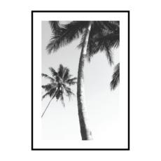 Постер на стену Пальмы чб