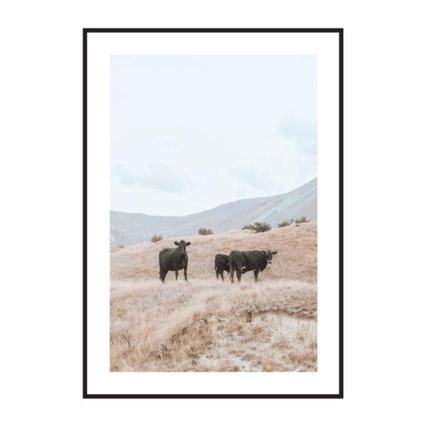 Постер на стену Коровы