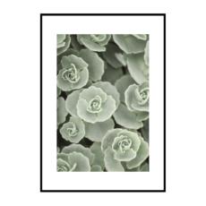 Постер на стену Суккуленты цветы светлые