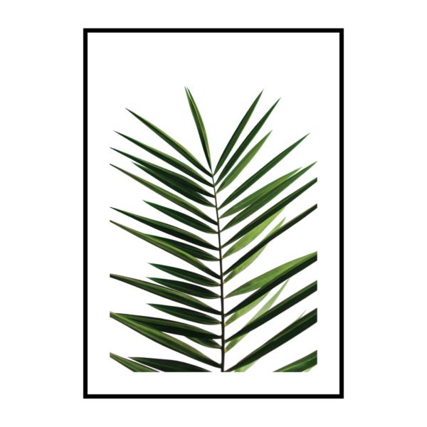 Постер на стену Лист пальмы 2