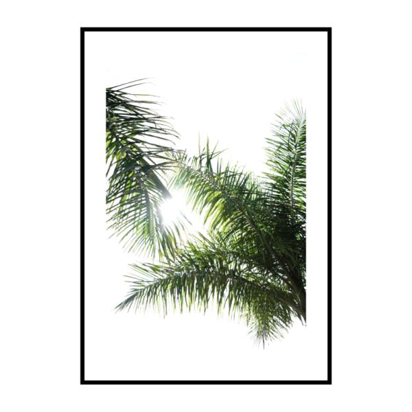 Постер на стену Листья пальмы