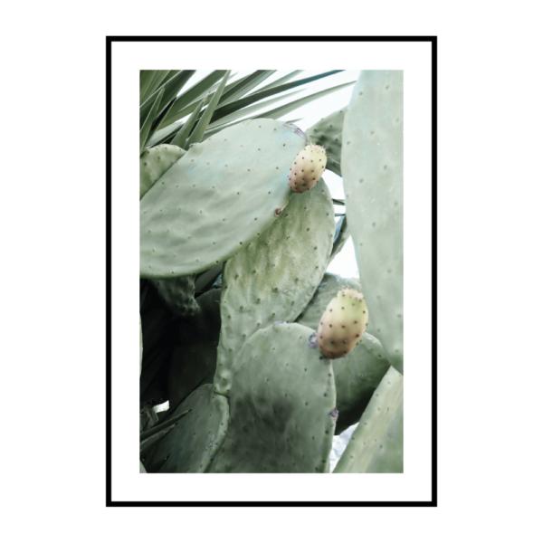 Постер на стену Кактус светлый
