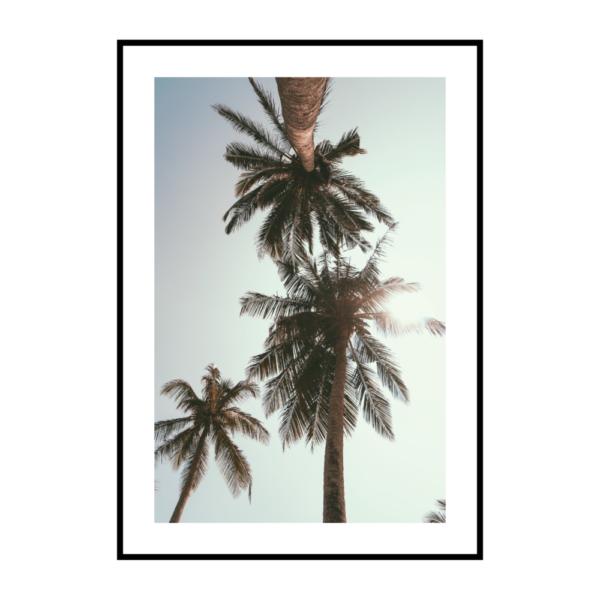 Постер на стену Три пальмы