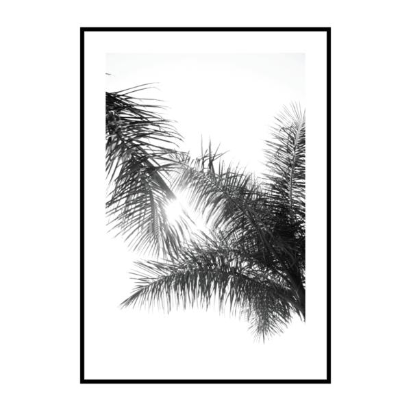 Постер на стену Листья пальмы чб