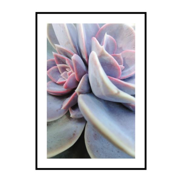 Постер на стену Суккулент фиолетовый 2