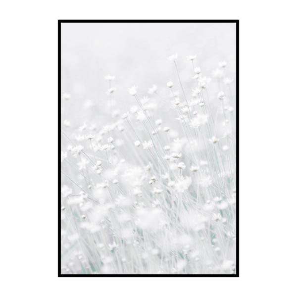 Постер на стену Белые цветы