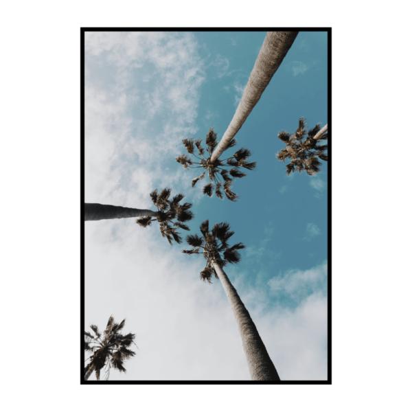 Постер на стену Пальмы с голубым небом