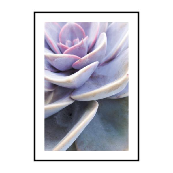 Постер на стену Суккулент фиолетовый