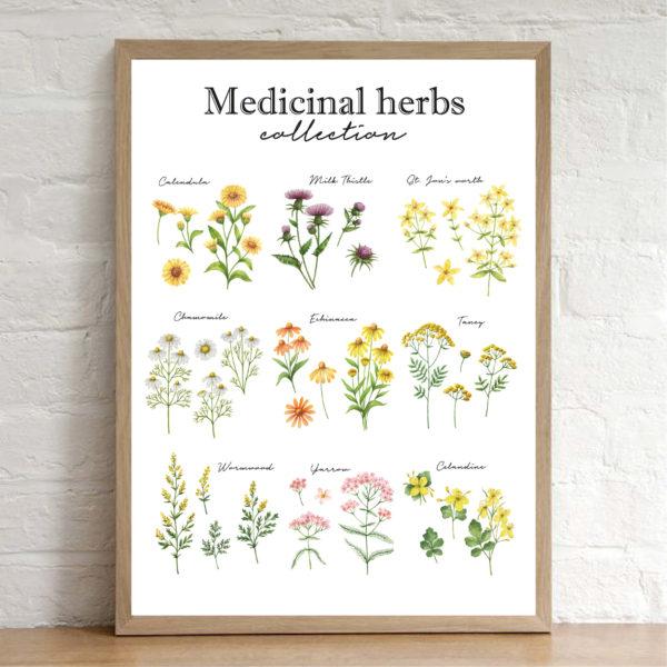 """Постер на стену """"Медицинские травы"""""""