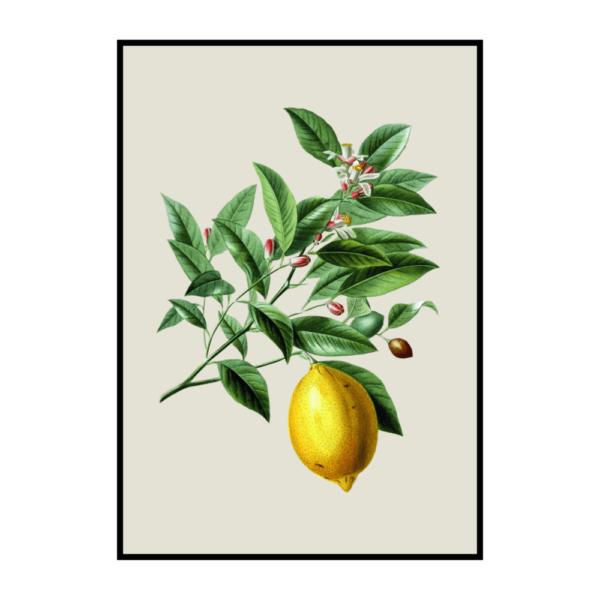 Постер на стену Лимон винтаж