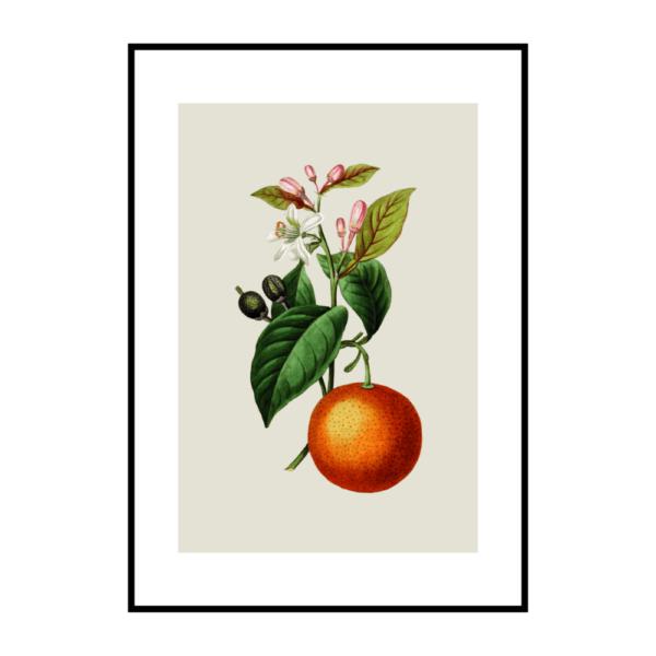 Постер на стену Апельсин