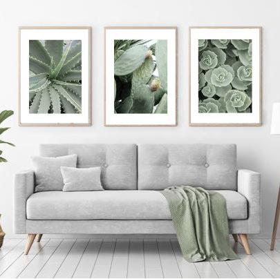 Трио постеров с кактусами