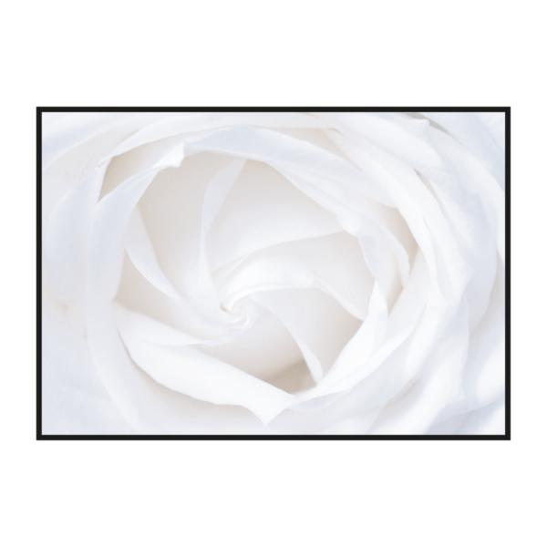 Постер на стену Белый цветок