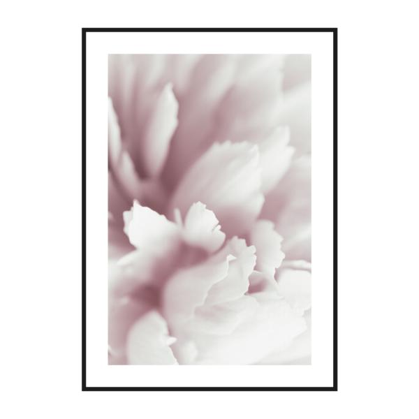 постер в раме цветы нежный розовый