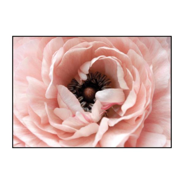 постер цветок розовый с черным центром