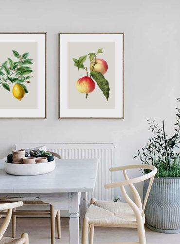 Пара постеров с винтажными иллюстрациями фруктов