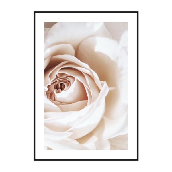 постер роза крупно бежевый