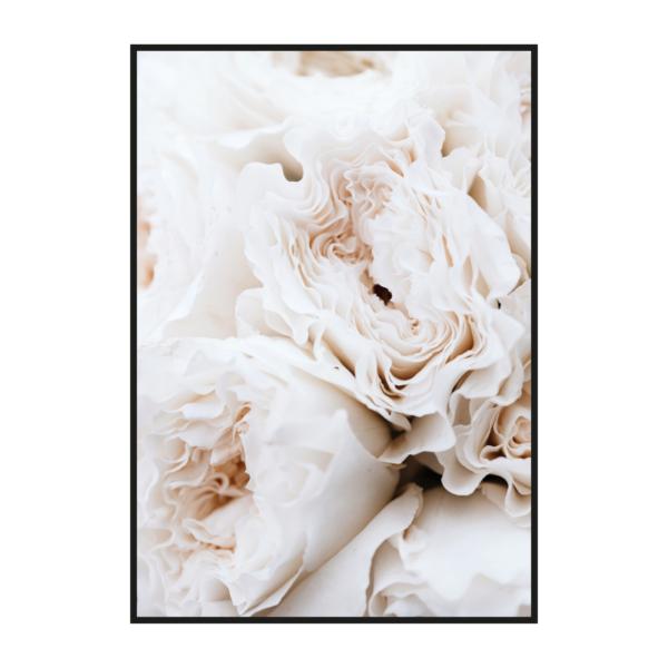постер бутоны розовой розы