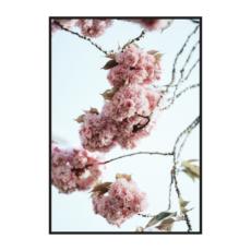 Цветение яблони постер