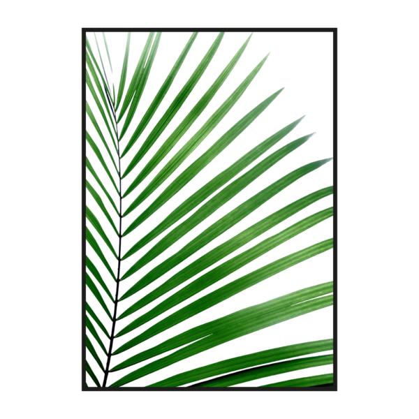 Большой лист на белом фоне папоротник