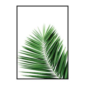 Лист пальмы с белым фоном