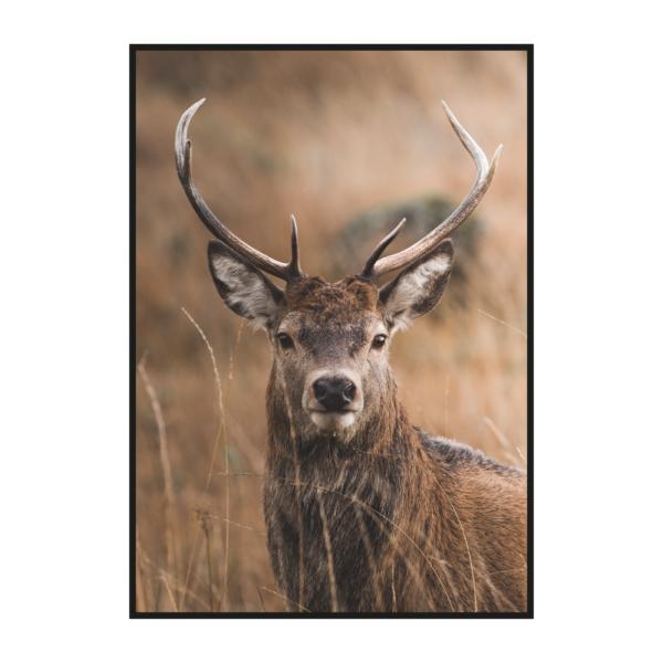 постер олень осенняя природная коллекция