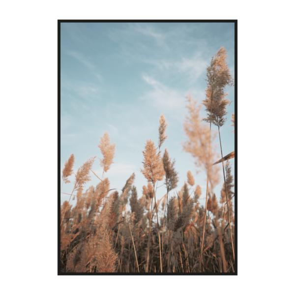 постер осенние колосья