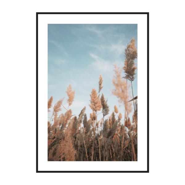 Осенние колосья 2