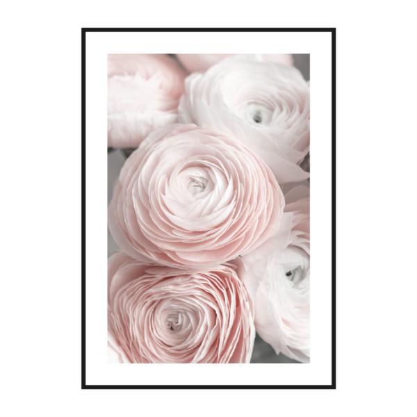 пионы постер розовый
