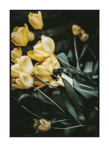 постер цветы желтые тюльпаны