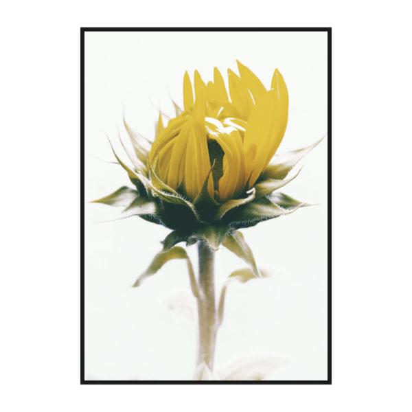 постер с желтым цветком в нейтральных цветах