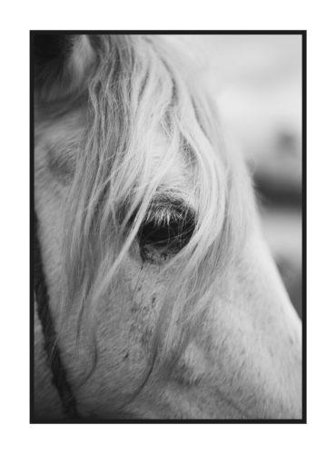 постер лошадь черно белый глаз