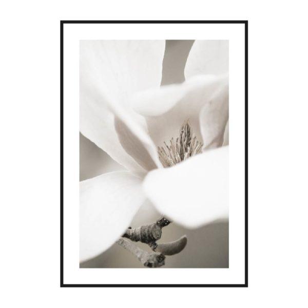 нежный постер цветок дерева