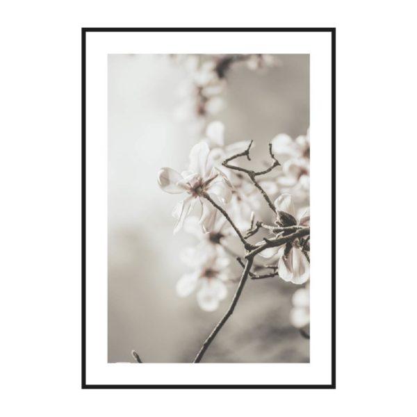 постер нежный яблоня цветущая