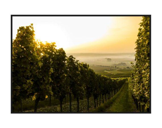 Постер на стену с виноградными полями