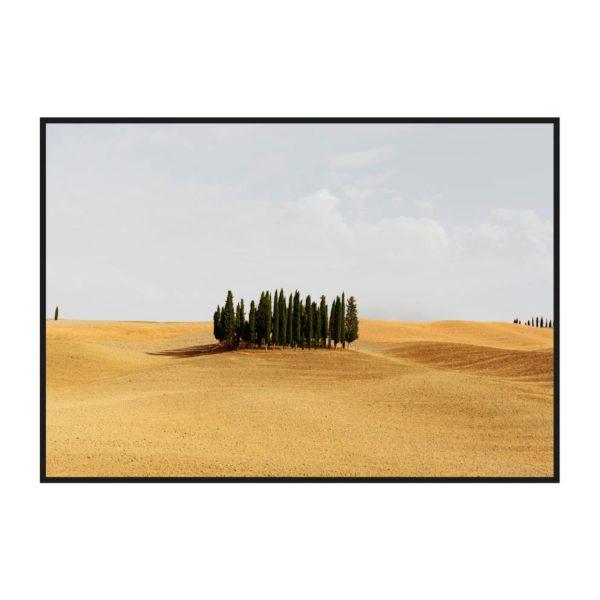 Постер на стену с деревьями Тосканы