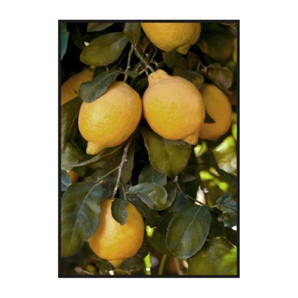 Постер на стену с лимонным деревом