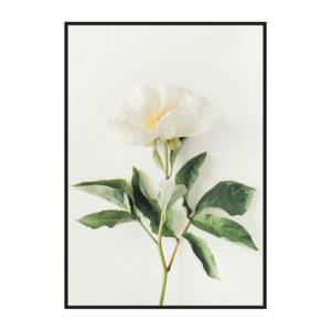 Постер на стену с белым цветком
